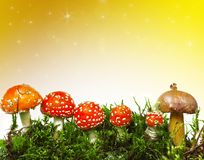 Seasonal background with mushrooms Stock Photos