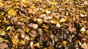 Seasonal background, a pile of autumn leaves. royalty free stock images