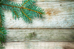 Seasonal background with a pine branch Stock Photography