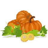 Seasonal background with pumpkins and corn Stock Photos