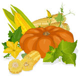 Seasonal background with pumpkins and corn Royalty Free Stock Photo