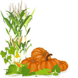 Seasonal background with pumpkins and corn Stock Image