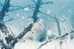 Seasonal backgrounds with snowfall Royalty Free Stock Image