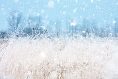 Seasonal backgrounds with snowfall Stock Image