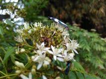 Seasonal. Butterfly flower season macro nature natural Stock Photos