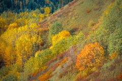 Seasonal Change. A south facing slope at the beginning of autumn Royalty Free Stock Photos