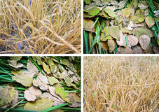 Seasonal collage Royalty Free Stock Image