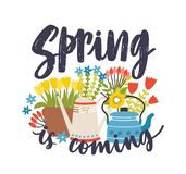 Seasonal composition with Spring Is Coming lettering written with cursive calligraphic font, blooming springtime flowers. And flowering plants, kettle and stock illustration
