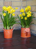 Seasonal daffodils decoration Royalty Free Stock Photos