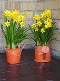 Seasonal daffodils decoration Royalty Free Stock Photos