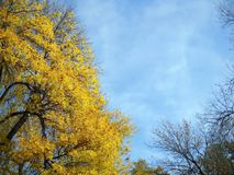 Colors of late autumn and early winter stock photo