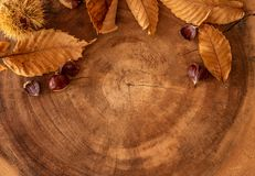 Seasonal fall background with leaves, chestnuts and a log. Has a very warm feel to it royalty free stock photo