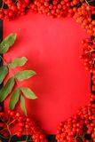 Seasonal fall concept, berries in frame on wooden table stock photography