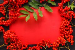 Seasonal fall concept, berries in frame on wooden table royalty free stock images