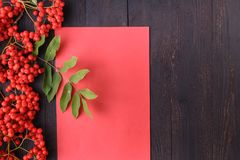 Seasonal fall concept, berries in frame on wooden table stock photo