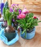 Seasonal flowering of balcony Stock Images