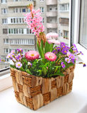 Seasonal flowering of balcony Stock Photo