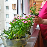 Seasonal flowering of balcony Stock Images