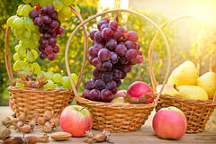 Seasonal fruit - Autumn fruits Royalty Free Stock Photo
