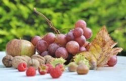 Seasonal fruits Stock Image