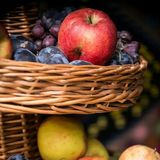 Seasonal fruits illustration Royalty Free Stock Image