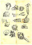 Seasonal fruits and vegetables. Hand drawn a large collection of seasonal fruits and vegetables from around the world. Detailed and precise work. (For similar stock illustration
