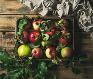 Seasonal garden harvest apples with green leaves in wooden tray Stock Photo