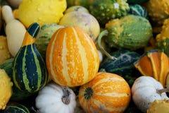 Seasonal gourds. Horizontal photo of seasonal gourds ready for the holidays at farm market stock image