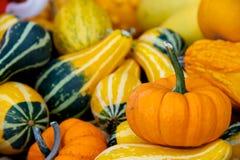 Seasonal gourds Stock Photos