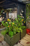 Seasonal home garden Royalty Free Stock Photography