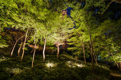 Seasonal illuminations at Rikugien Garden Stock Photo