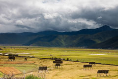 Seasonal lake covered with green grass and yellow hay. With hills at the background Stock Photography