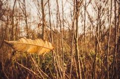Seasonal last winds Royalty Free Stock Photos