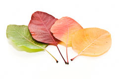 Seasonal leaves Stock Photos