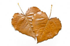 Seasonal leaves with heart shaped Royalty Free Stock Images