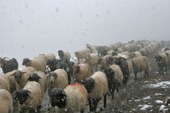 Seasonal Migration Royalty Free Stock Image