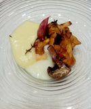 Seasonal mushrooms with egg and potatos cream. Stock Photography
