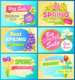 Seasonal Offer Spring Sale Advertisement Flowers. Seasonal offer spring big sale advertisement daisy flowers, bouquet of tulips and fresh anemone vector royalty free illustration