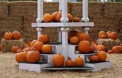 Seasonal Orange Pumpkins Display Stock Images