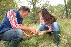 Seasonal picking in nature Royalty Free Stock Images