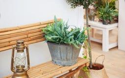 Seasonal plants at home yard Royalty Free Stock Images