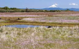 Seasonal Pond with Wildflowers on the Table Rocks in Oregon. Seasonal vernal pools and wildflowers on lower table rock plateau in southern oregon with mt stock photography