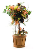 Seasonal Potted Tree Stock Image