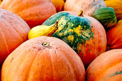 Seasonal Pumpkin Background Royalty Free Stock Photography