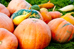 Seasonal Pumpkin Background Stock Photo