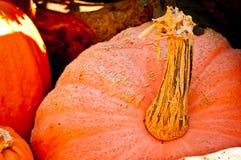 Seasonal Pumpkin Background Royalty Free Stock Photography