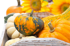 Seasonal pumpkin in wooden tray, selective focus Stock Photography
