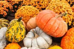 Seasonal Pumpkins Stock Image
