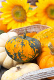 Seasonal pumpkins in a wooden tray and yellow flowers Stock Image