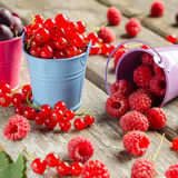 Seasonal ripe berries. Harvest. Red currants, raspberries and go Royalty Free Stock Photo